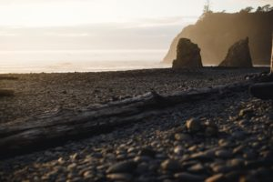 Olympic National Park plays host to an elopement.